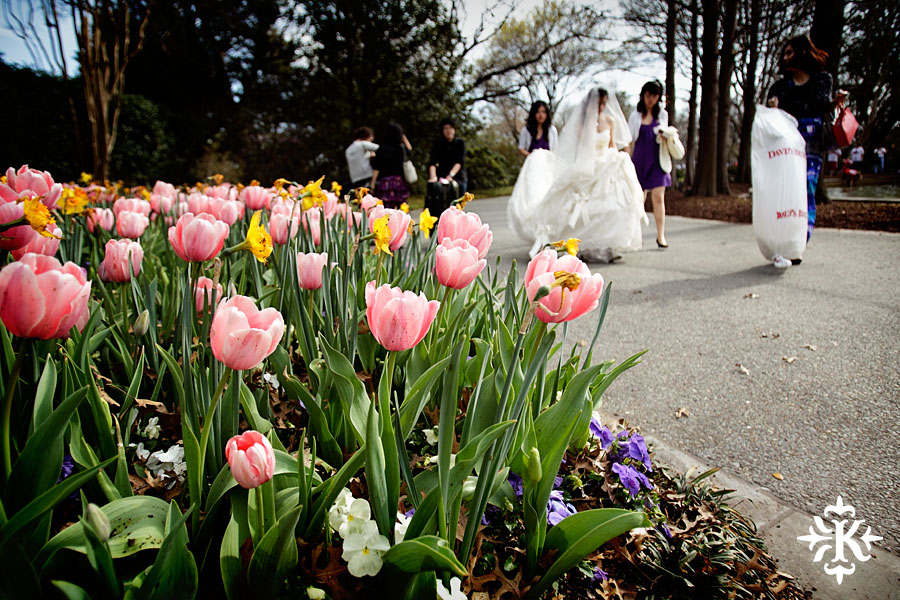 Tulips at a wedding in the Dallas Arboretum photographed by Austin photographer Tony Ku